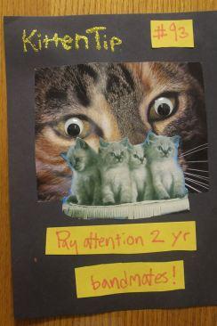 kitten tip 2