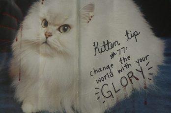 kitten tip